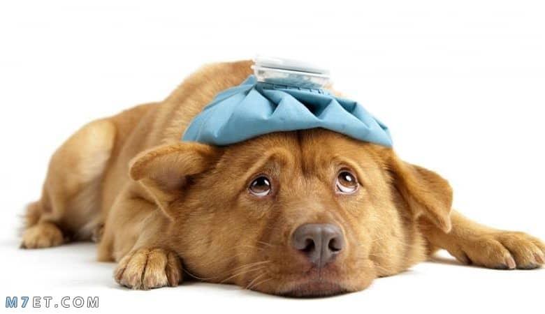 امراض الكلاب وعلاجها