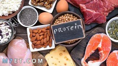 Photo of نظام غذائي عالي البروتين لكمال الأجسام