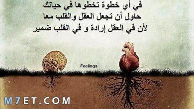 Photo of حكم قوية تعين على مصاعب الحياة