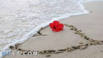Photo of عبارات جميلة عن الحب : 100 عبارة مؤثرة