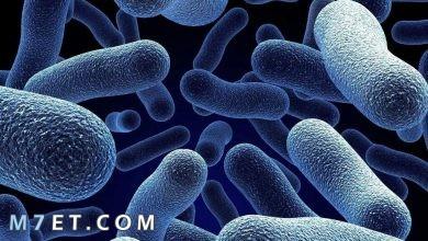 Photo of أمراض البكتيريا | وانواعها المختلفة