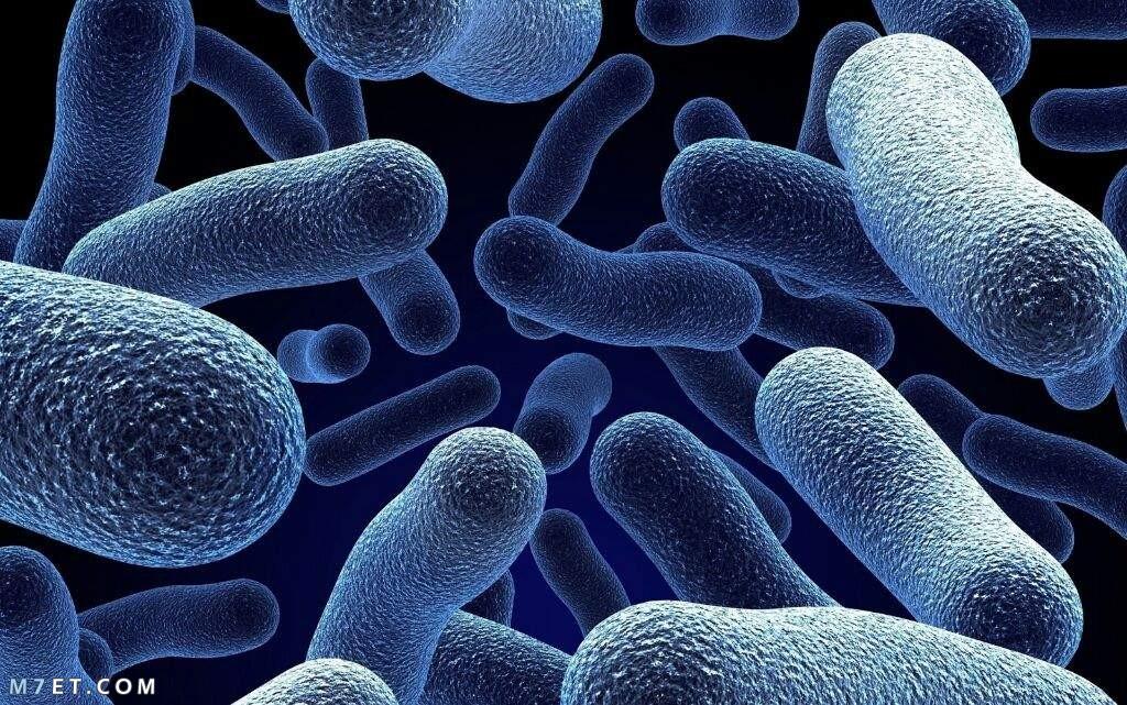 انواع البكتيريا