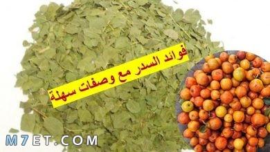 Photo of فوائد السدر للشعر وطريقة استخدامه في المنزل