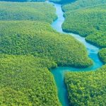 أجمل الغابات في العالم بطبيعة خلاقة تذهل العين من جمالها