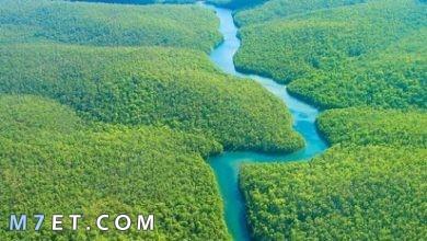 Photo of أجمل الغابات في العالم بطبيعة خلاقة تذهل العين من جمالها