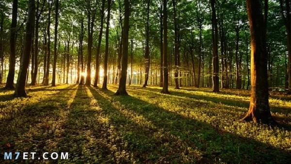 أجمل الغابات في العالم