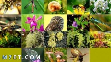 Photo of أهمية التنوع الحيوي | أنواعه | طرق المحافظة على التنوع الحيوي