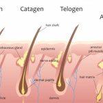 مراحل نمو الشعر وكيفية العناية بكل مرحلة على حدة