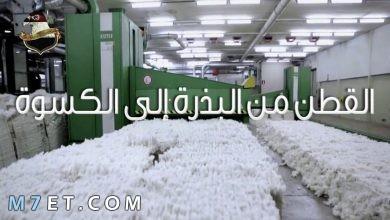 Photo of مراحل صناعة القطن في خطوتين وأهم استخدامات القطن