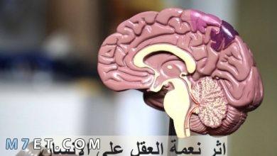 Photo of اثر نعمة العقل على الانسان