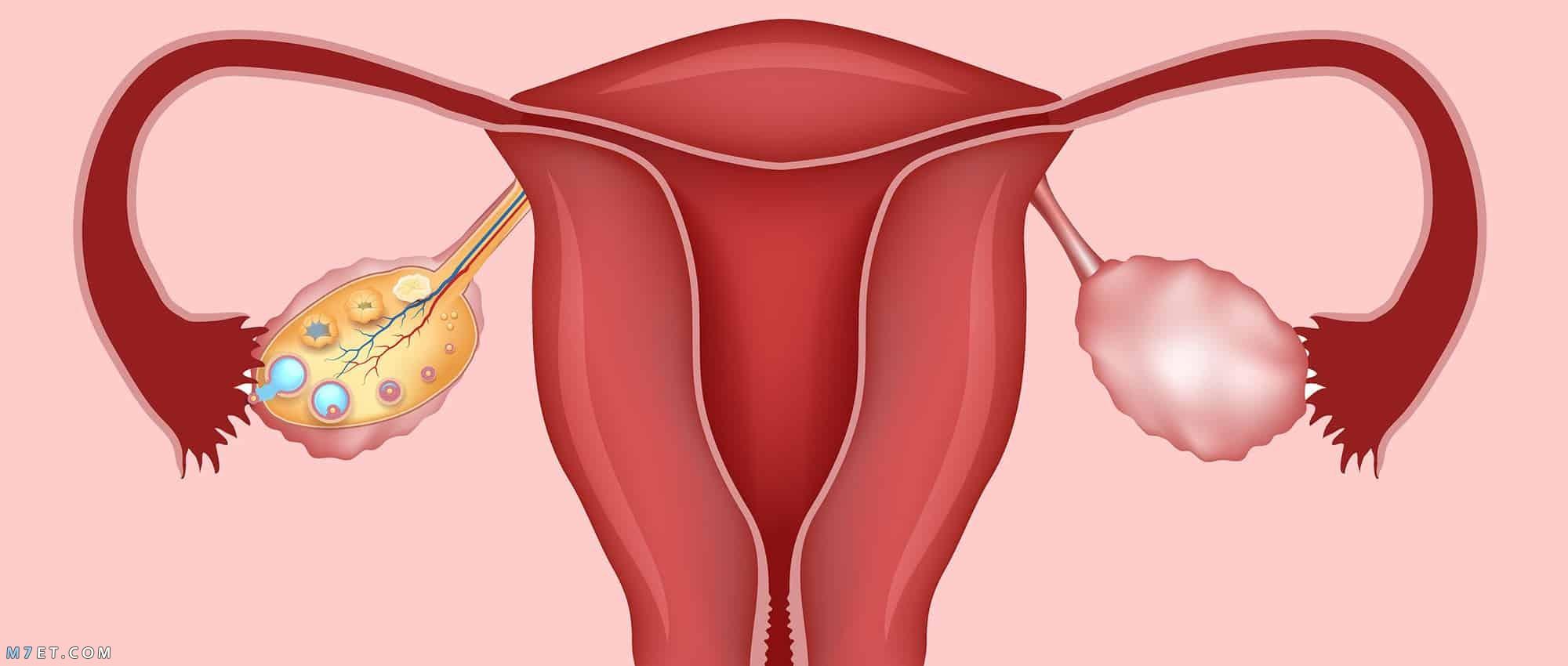 اسباب تقلصات الرحم