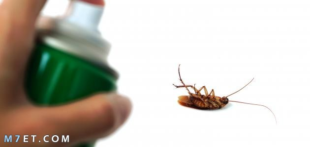 التخلص من الصراصير الصغيرة