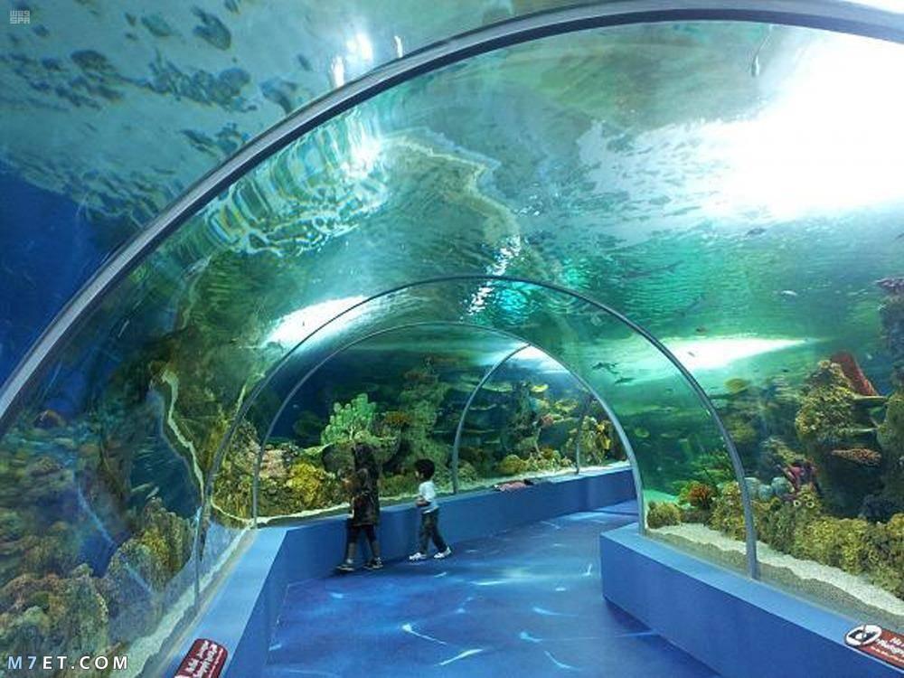 متحف الأحياء المائية.