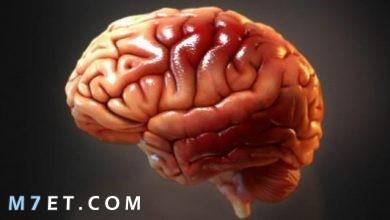 Photo of اسباب تلف خلايا المخ وطرق العلاج بالقرآن والأعشاب الطبيعية