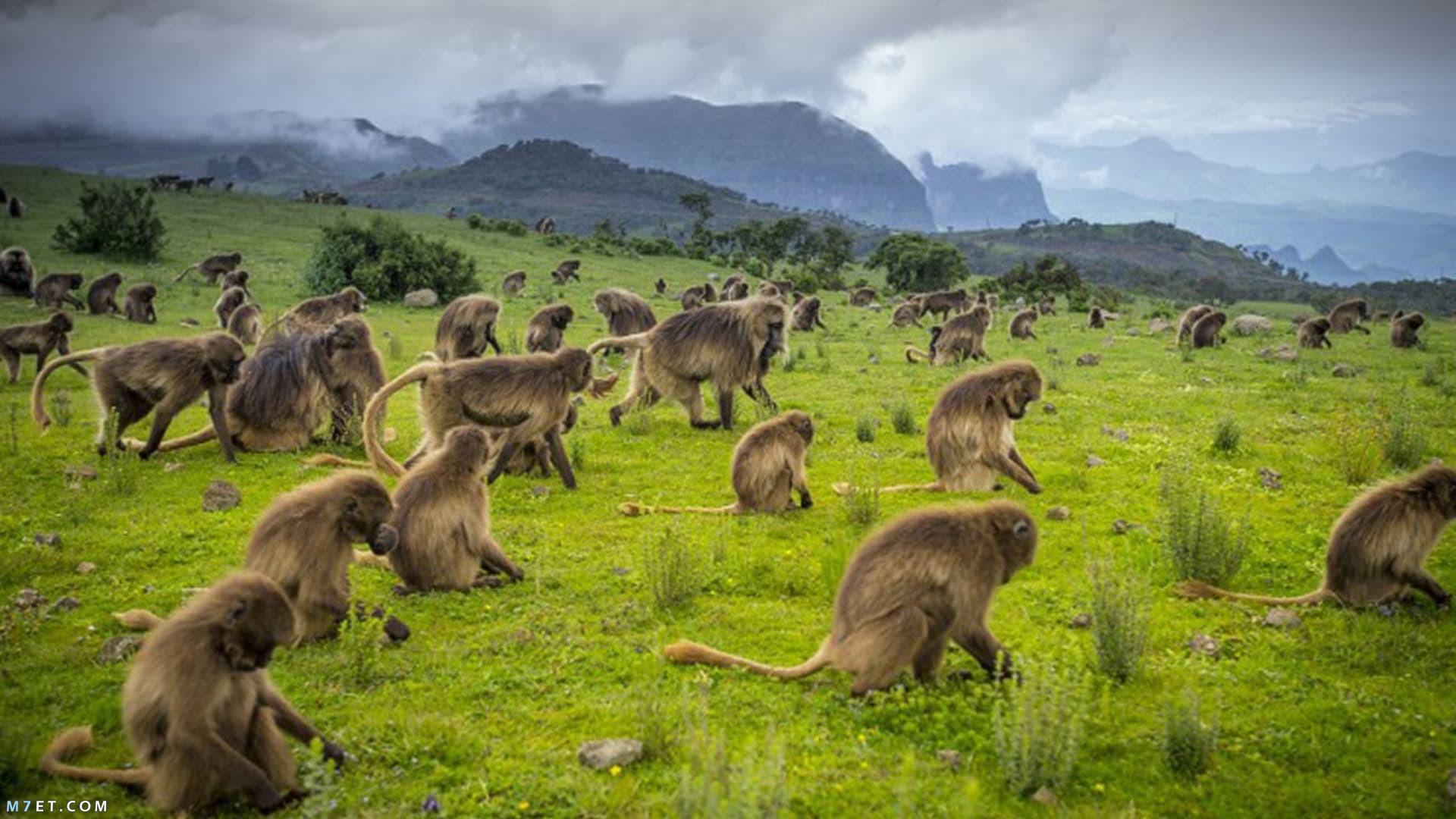 السياحة في إثيوبيا