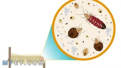 Photo of كيف تتخلص من حشرات الفراش نهائيا بالاعشاب