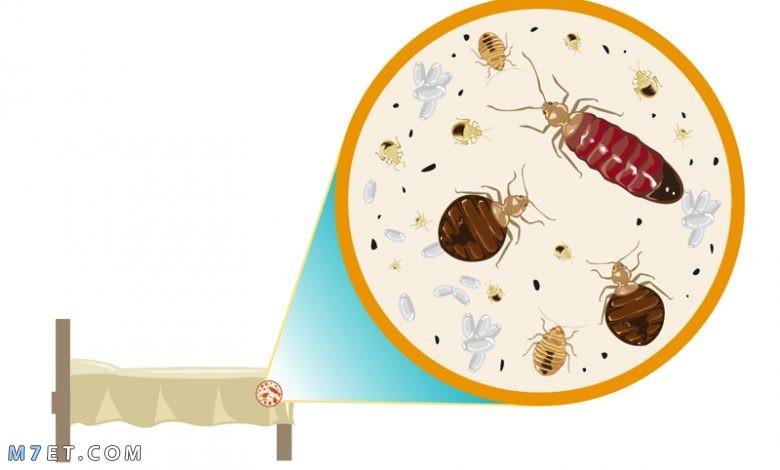 كيف تتخلص من حشرات الفراش