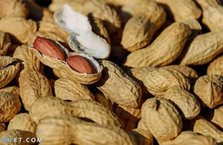 فوائد الفول السوداني للشعر