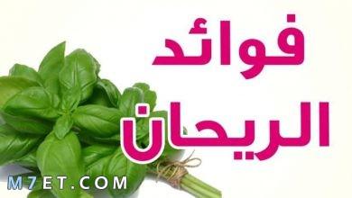 Photo of أهم فوائد الريحان للبشرة الدهنية والجافة