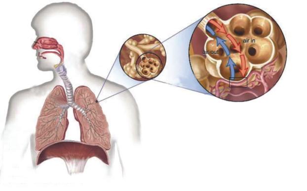 علاج السل الرئوي