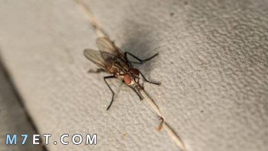 Photo of اسباب ظهور الحشرات في المنزل