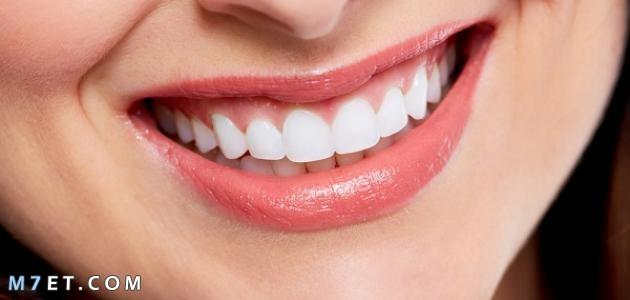 ما أهمية الأسنان