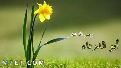 Photo of ابو الدرداء ترك التجارة لأجل العبادة هل تصدق الأمر؟!