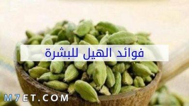 Photo of فوائد الهيل للبشرة ولعلاج حب الشباب وطرق استخدامه بالتفصيل