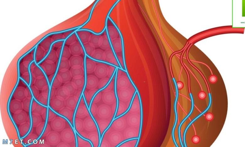 علاج التهاب الخصية