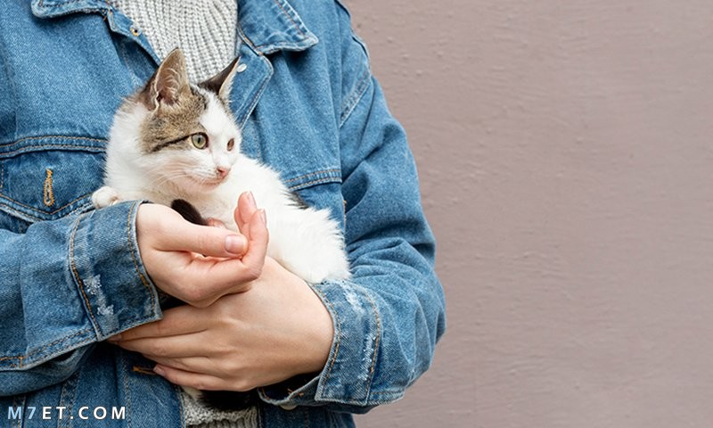 علاج داء القطط