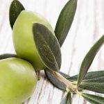 فوائد اوراق الزيتون للاسنان وطريقه استخدامه بالتفصيل