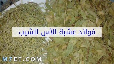 Photo of فوائد عشبة الاس للشعر وطريقه استخدامه بالتفصيل