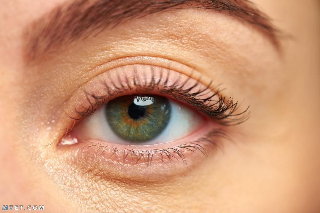 كيفية المحافظة على العين