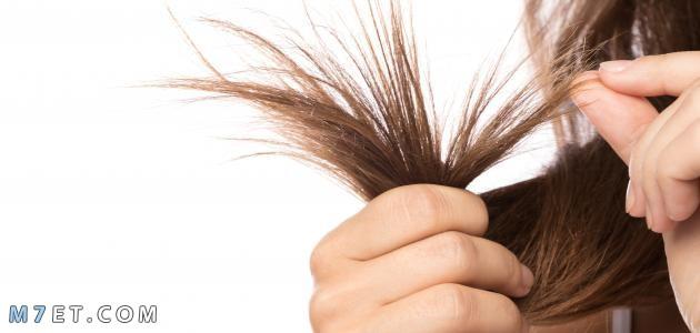 كيفية التخلص من تقصف الشعر الجاف