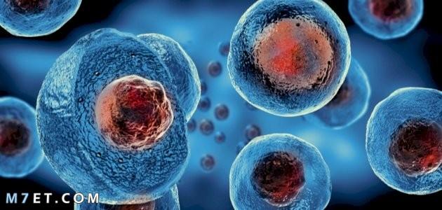 تعريف الخلية