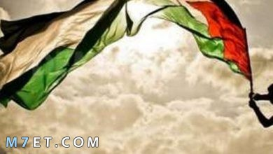 Photo of أجمل ما في فلسطين وتلك البقعة المقدسة بها