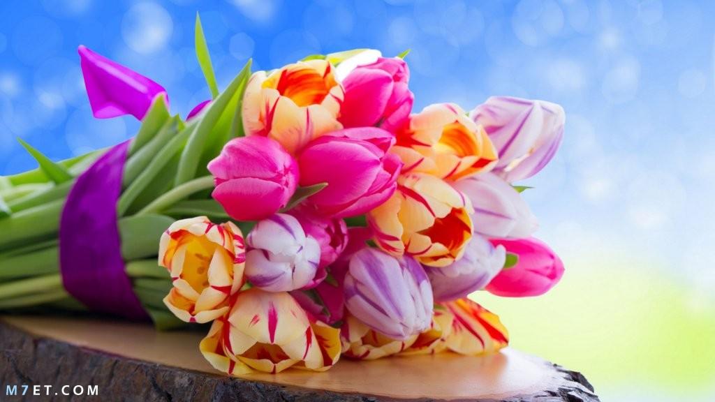 صور تهنئة بعيد الربيع | صور تهنئة بعيد شم النسيم |كل عام وأنتم بخير | صور كفر فيس بوك
