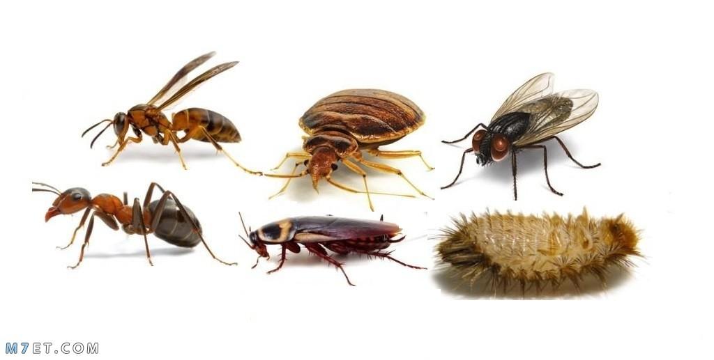 التخلص من الحشرات المنزلية لبيت صحي وآمن