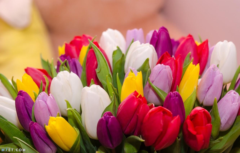 صور تهنئة بعيد الربيع | صور تهنئة بعيد شم النسيم |ورود جميلة | صور كفر فيس بوك