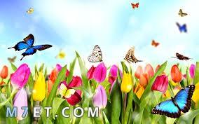 صور تهنئة بعيد الربيع | صور تهنئة بعيد شم النسيم |أجمل فراشات | صور كفر فيس بوك