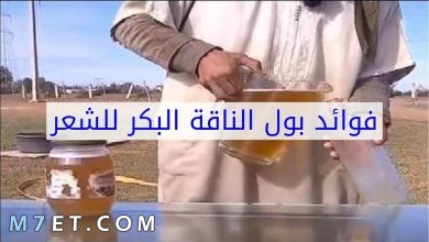 Photo of فوائد لبن الابل للشعر وطريقه استخدامه بالتفصيل