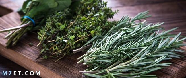 علاج رائحة الفم الكريهة بالاعشاب