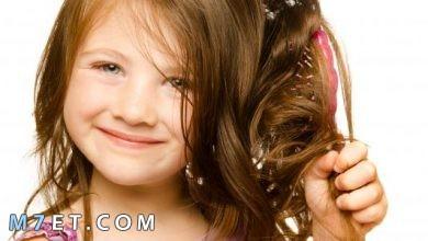 Photo of كيفية علاج تشابك الشعر بالوصفات الطبيعية