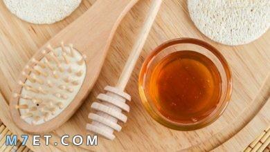 Photo of أهم فوائد العسل للشعر الجاف والمتقصف لشعر أكثر حيوية وخالي من التلف