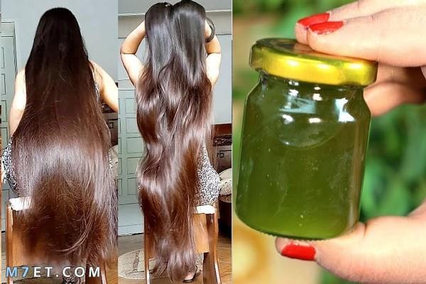 السدر لتكثيف الشعر