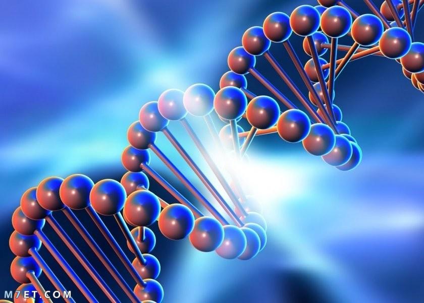 أنواع الأمراض الوراثية