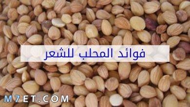 Photo of فوائد المحلب للشعر التالف| 6 وصفات لشعر خالي من التقصف