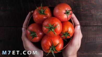 Photo of فوائد الطماطم للشعر| 5 وصفات لشعر أكثر حيوية