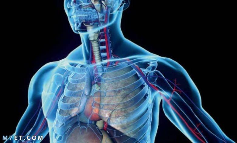 أنواع الخلايا في جسم الإنسان