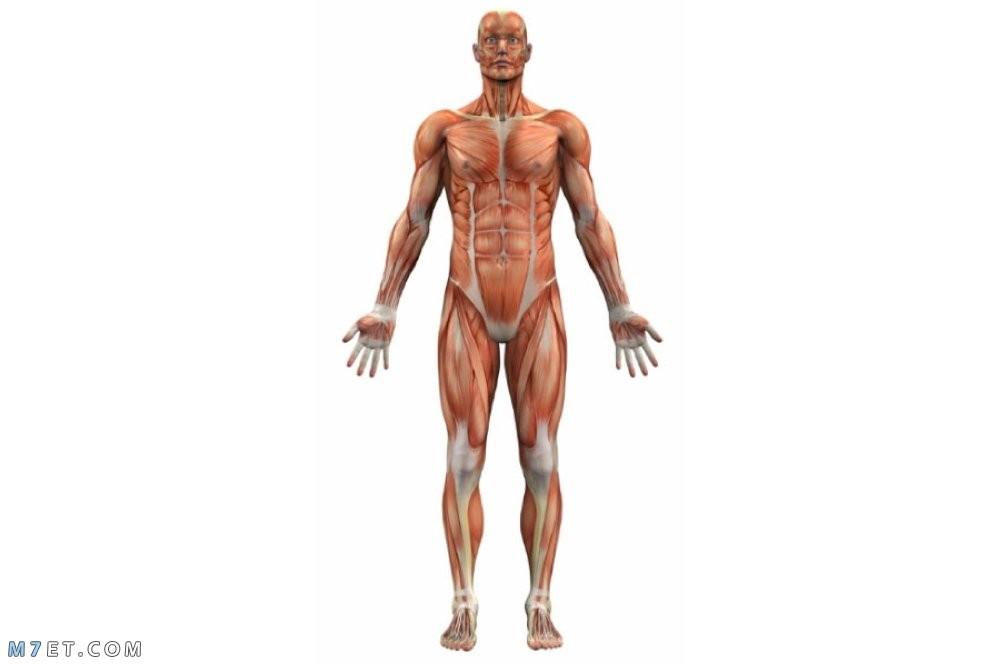 تخليص الجسم من السومو